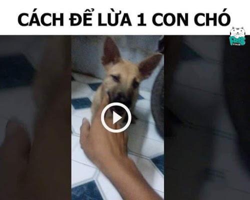 Cách để lừa một con chó (1)