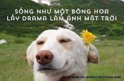 Sống như một bông hoa, lấy drama làm ánh mặt trời - chó cài hoa