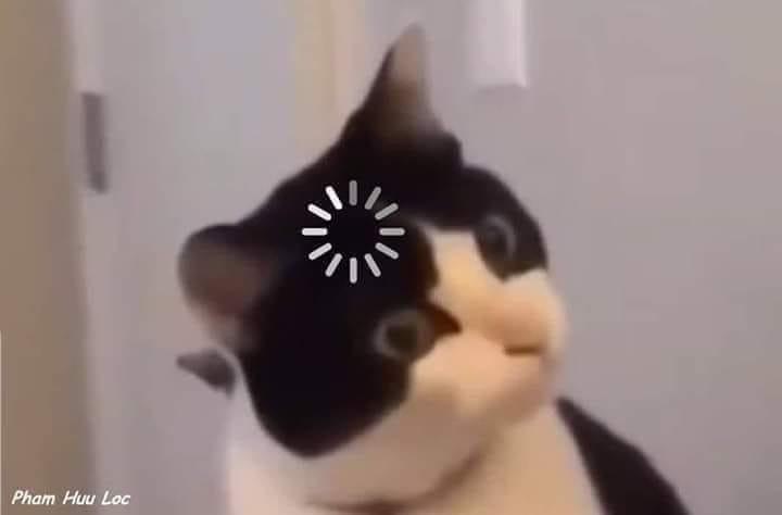 Mèo đen chậm hiểu loading, mặt ngơ ngác