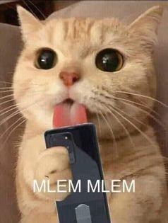 Mèo liếm điện thoại mlem mlem