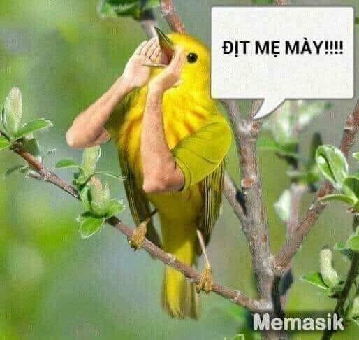Chú chim có hai tay hót dit mẹ mày