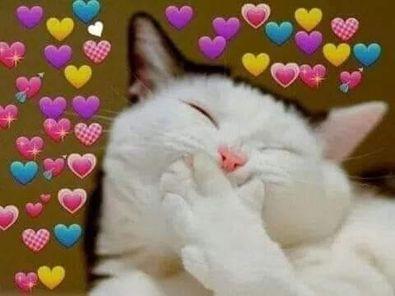 Mèo cute dễ thương cười với đầy trái tim