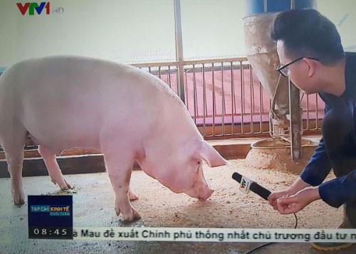 VTV phỏng vấn lợn nói trên tv