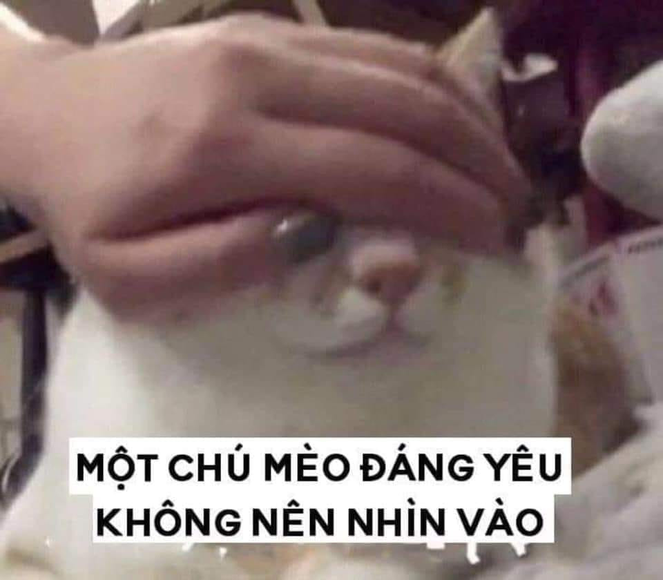 Một chú mèo đáng yêu không nên nhìn vào, mèo bị che mắt