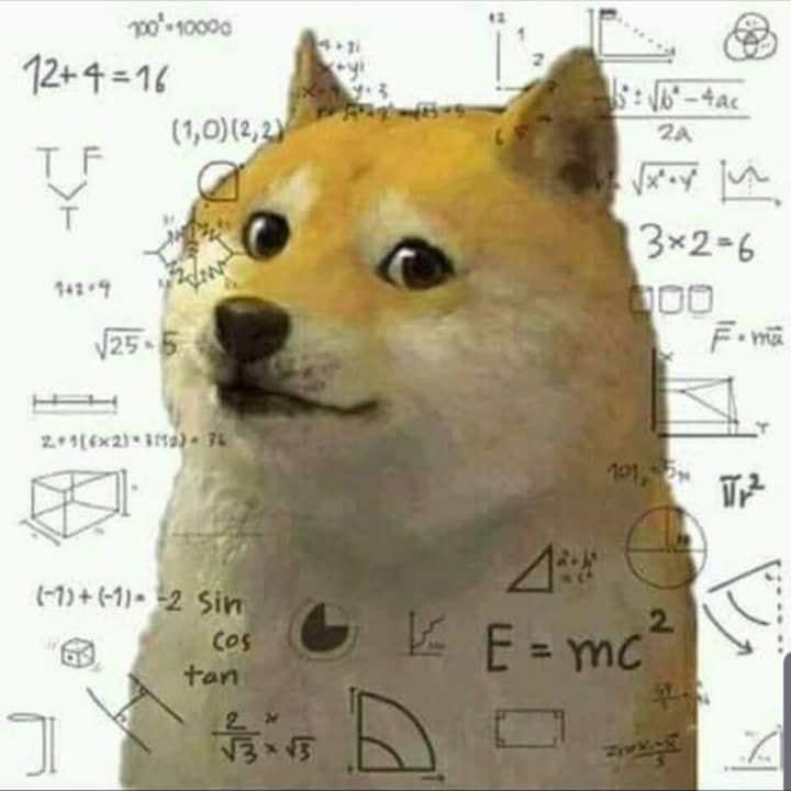 Chó vàng suy nghĩ bối rối với đồ thị hàm số công thức