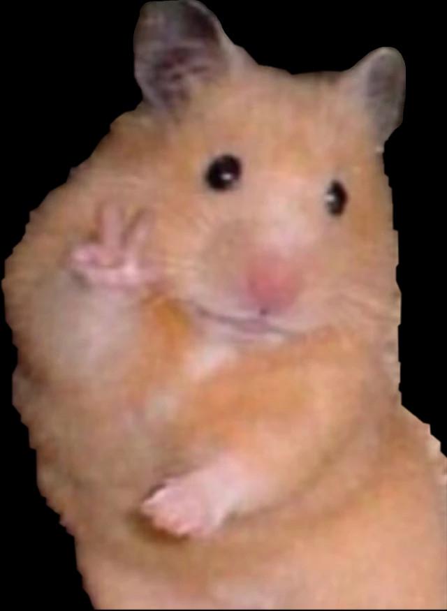 Chuột giơ tay hello xin chào các bạn