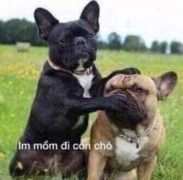 Im mồm đi con chó - hai con chó bịt mồm nhau
