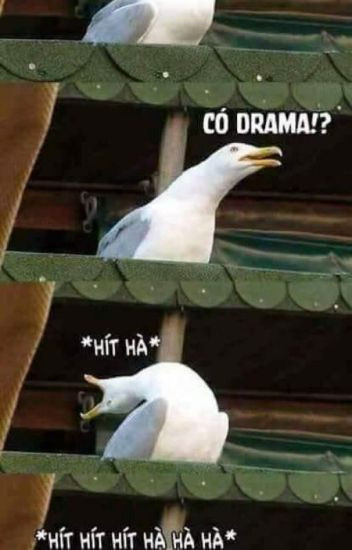 Chú chim vươn cổ hít hà drama
