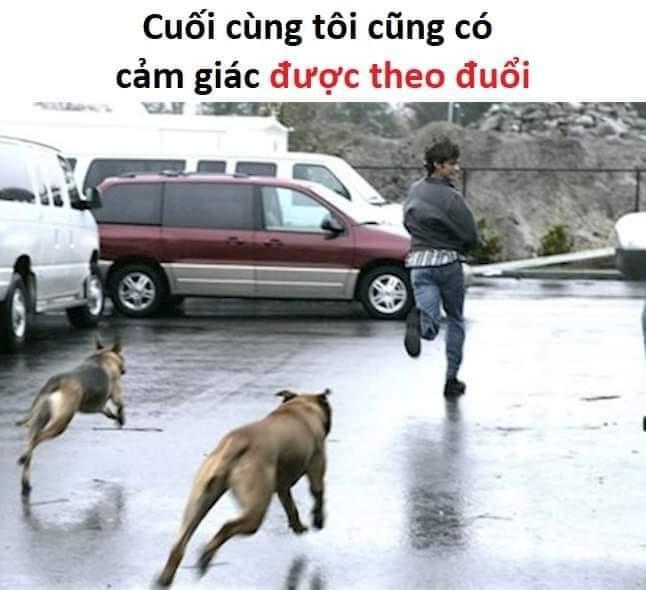Bị chó đuổi - cảm giác được theo đuổi