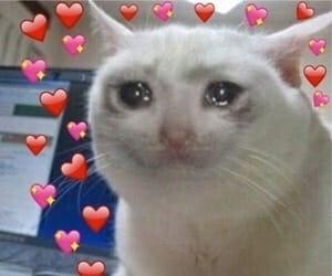 Mèo khóc với nhiều emoji trái tim