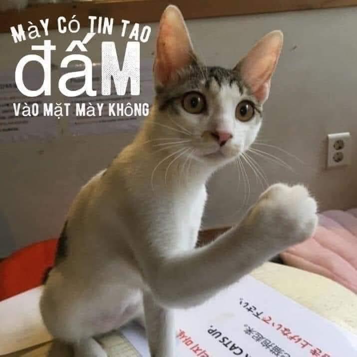 Mèo giơ nắm đấm: Mày có tin tao đấm vào mặt mày không?