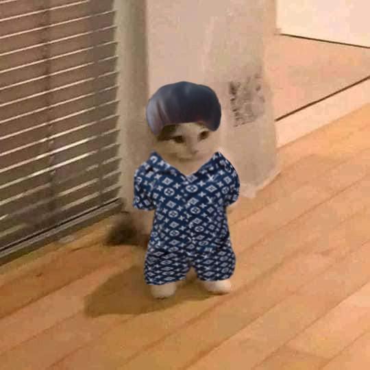 Chú mèo đầu cắt moi mặc áo Luon Vuituoi