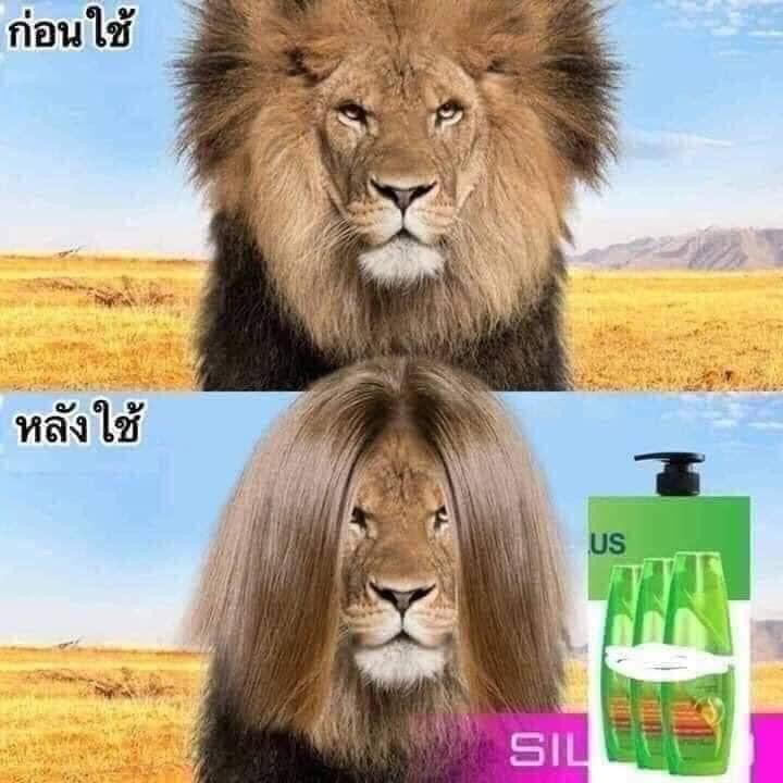 Bờm sư tử mượt mà sau khi dùng dầu gội - quảng cáo dầu gội chất