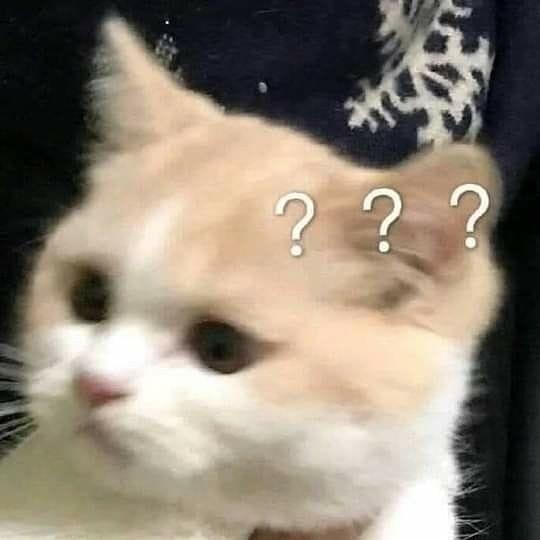 Mèo mặt ngơ ngác bới ba dấu hỏi