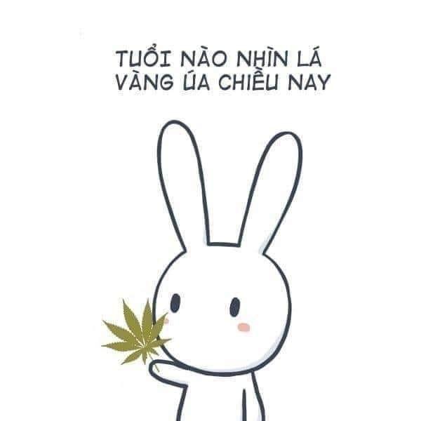 Tuổi nào nhìn lá vàng úa chiều nay - thỏ bảy màu cầm lá cần