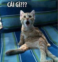 Cái gì? Mèo há mồm ngạc nhiên