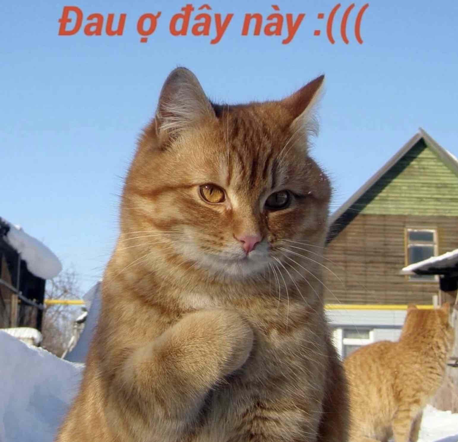 Đau ở đây này - mèo vàng đưa tay lên tim