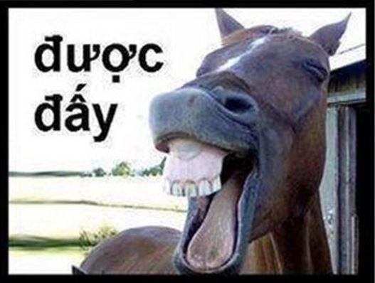 Được đấy - meme con ngựa cười