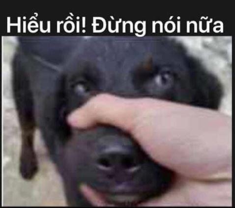 Hiểu rồi đừng nói nữa. Lấy tay giữ mồm chó.