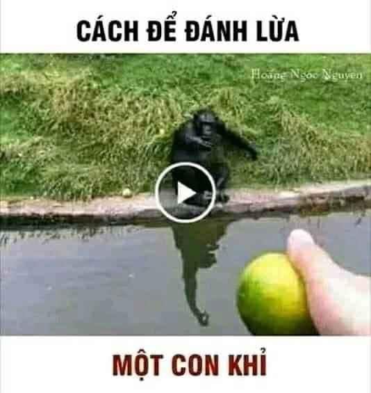 Cách để lừa một con khỉ