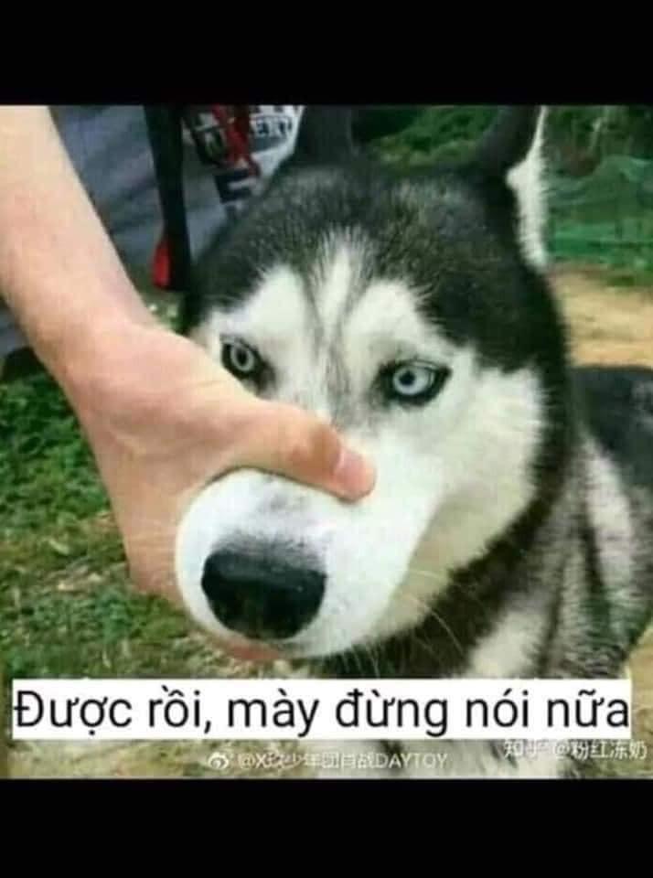 Bóp mõm chó: được rồi mày đừng nói gì nữa