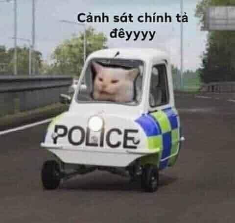 Mèo ngồi trong xe cảnh sát chính tả