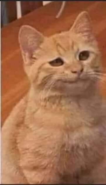 Chú mèo vàng bĩu môi nhìn ái ngại