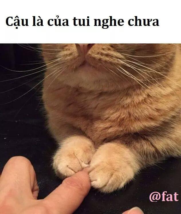 Mèo giữ ngón tay: Cậu là của tui nghe chưa