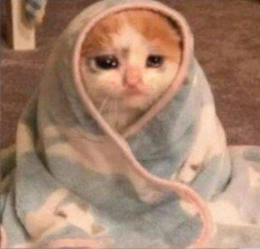 Mèo trùm chăn khóc lóc