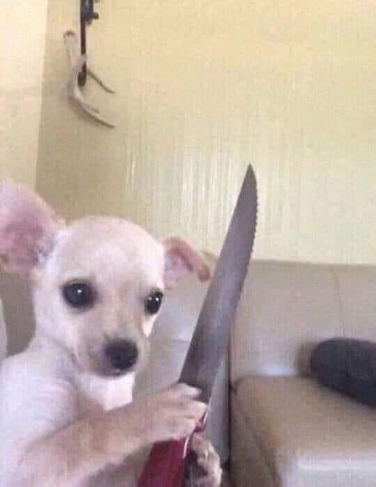 Chú chó cầm dao đe doạ