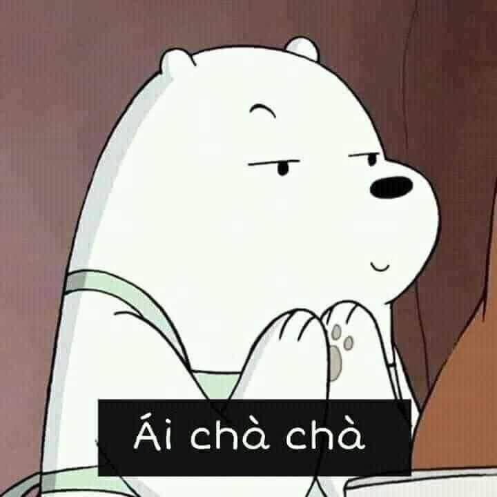 Gấu trắng chắp tay nói ái chà chà