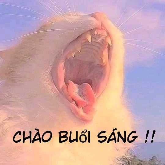 Megraveo trắng haacute mồm nhe răng chagraveo buổi saacuteng Meme megraveo Ảnh chế meme