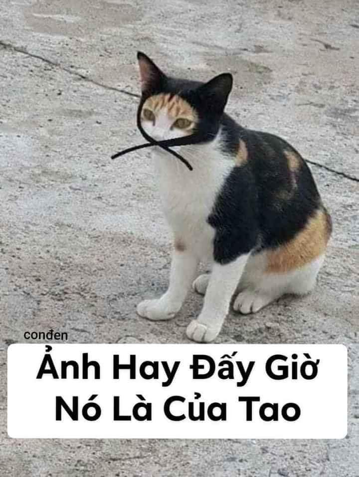 Mèo đạo tặc: ảnh hay đấy giờ nó là của tao