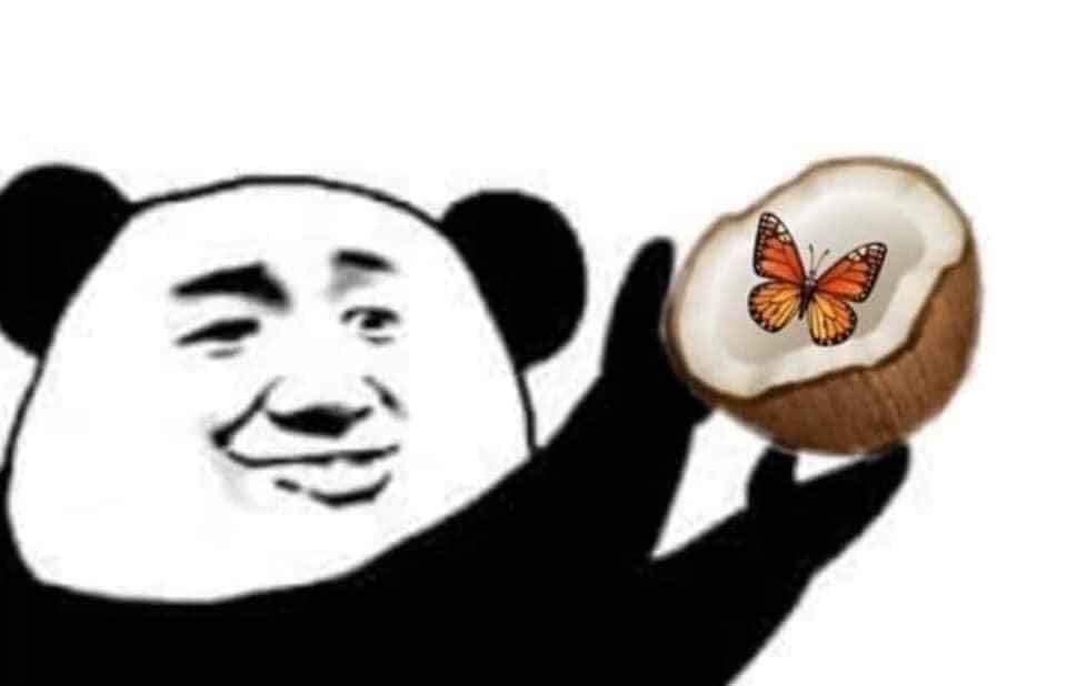Gấu trúc đưa trái dừa có con bướm bên trong