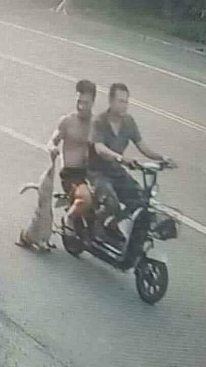 Hai thanh niên đi xe đạp điện xách theo con chó