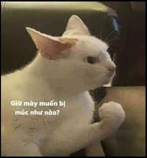 Mèo đưa nắm đấm: Giờ mày muốn bị múc như thế nào?