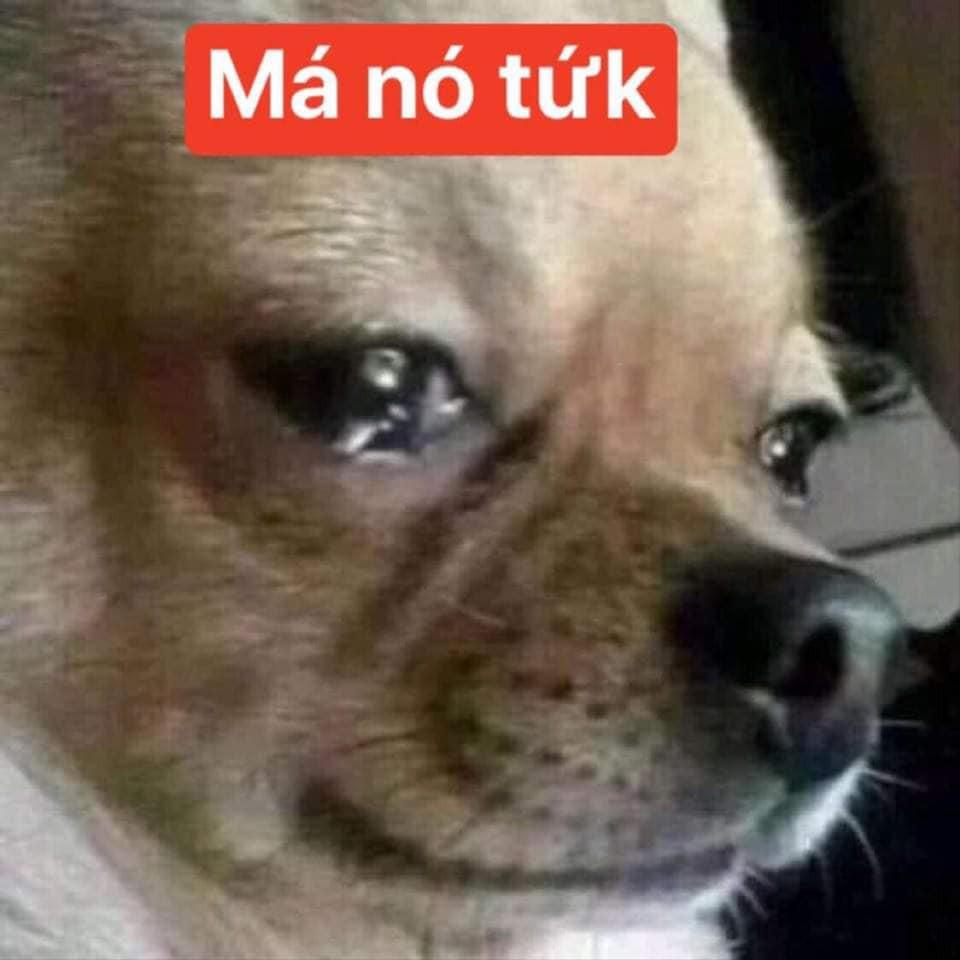 Chú chó khóc lóc má nó tứk