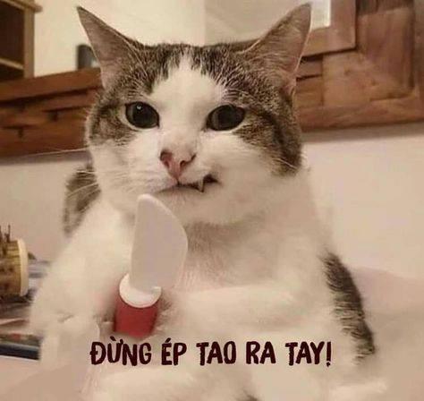Mèo cầm dao nhựa nói đừng ép tao ra tay