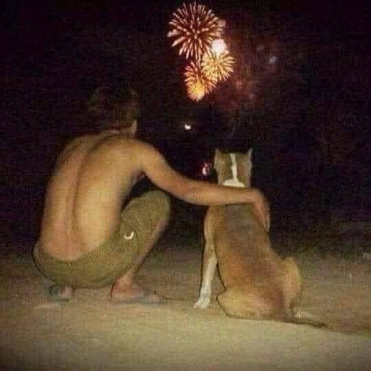Thanh niên FA quàng tay chú chó ngắm pháo hoa vào đêm giao thừa