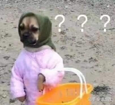 Chú chó mặc quần áo người cầm làn đi chợ mặt đầy dấu hỏi