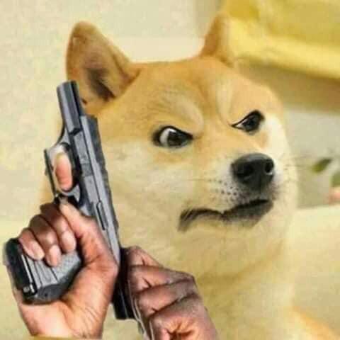 Chó vàng lên đạn cho súng ngắn với đôi mắt giận dữ