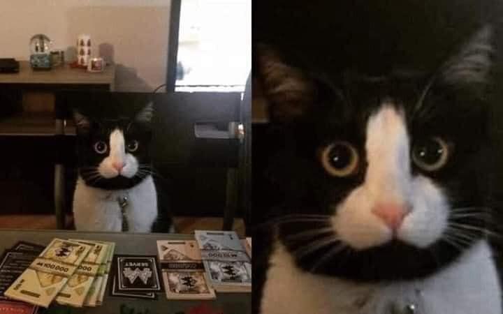 Chú mèo có khuôn mặt hình cái chim