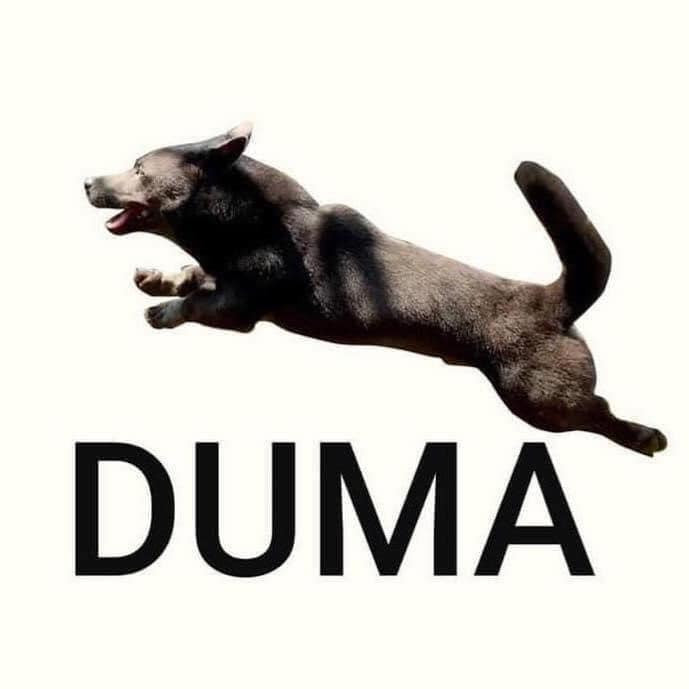 Logo Duma con chó Dúi đen
