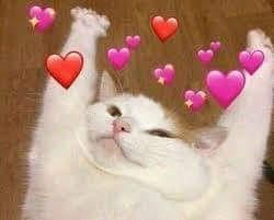 Mèo đưa 2 tay đầu hàng với nhiều trái tim