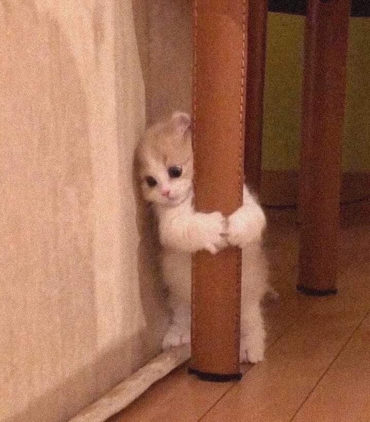 Mèo ôm chân bàn đáng yêu vô cùng