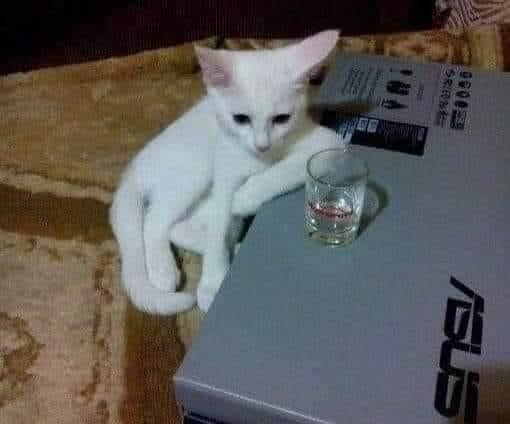 Mèo ngồi trầm tư trước ly rượu trên bàn