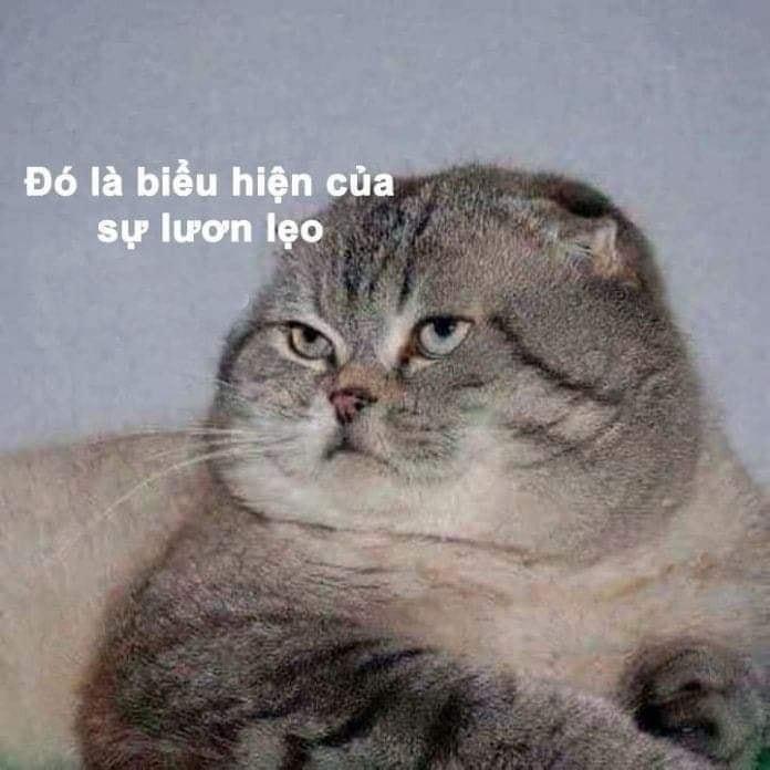 Mèo mập ú nói đó là biểu hiện của sự lươn lẹo