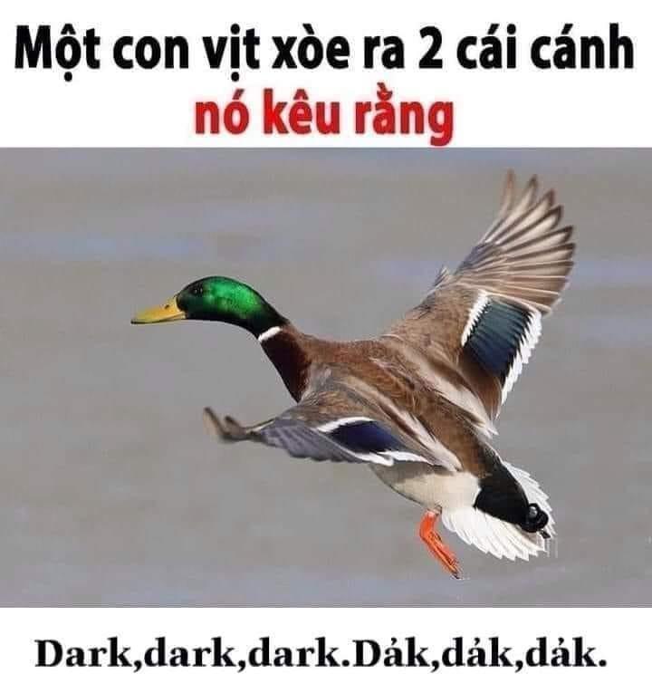 Một con vịt xoè ra 2 cái cánh, nó kêu rằng dark dark dark dảk dảk dảk