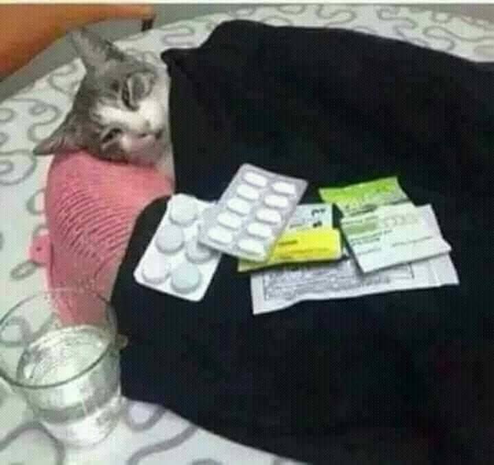Mèo bị ốm đắp chăn với nhiều thuốc tây và cốc nước kế bên