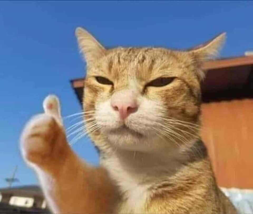 Mèo vàng đưa ngón tay like